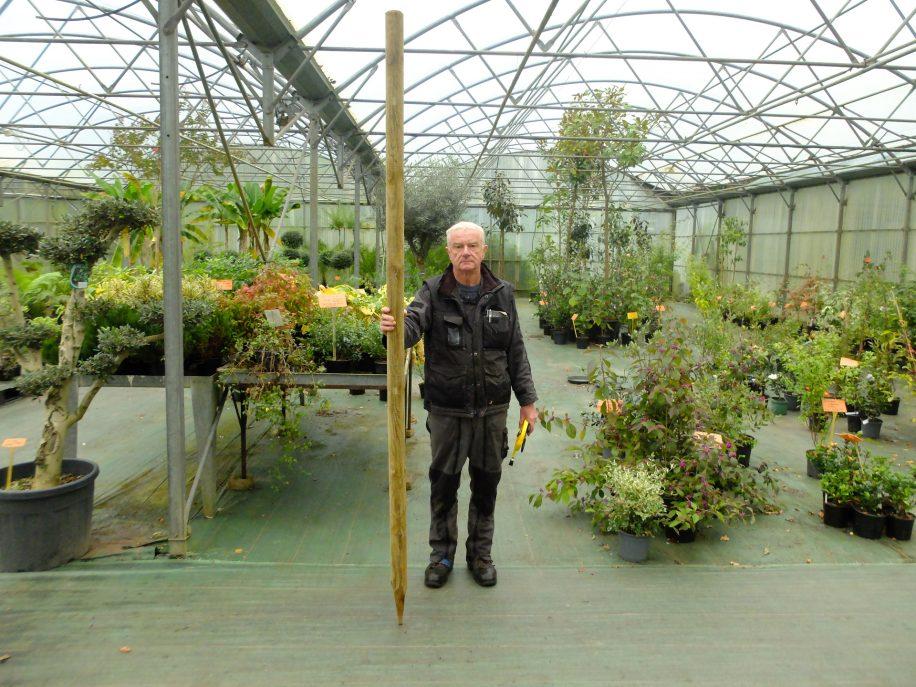 Tuteur en pin de 2,5 mètres