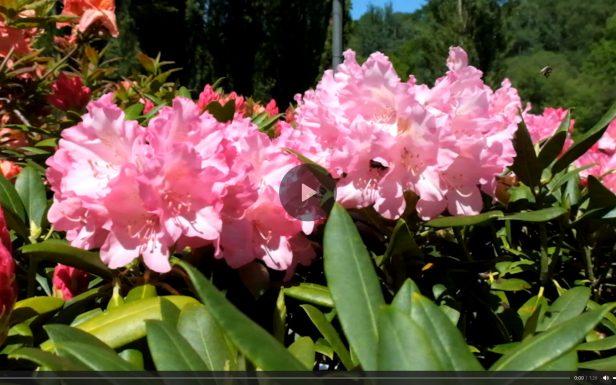 Capture d'écran d'un lecteur de vidéo